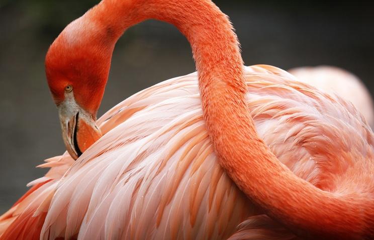 В Нижнем Новгороде спасли второго розового фламинго