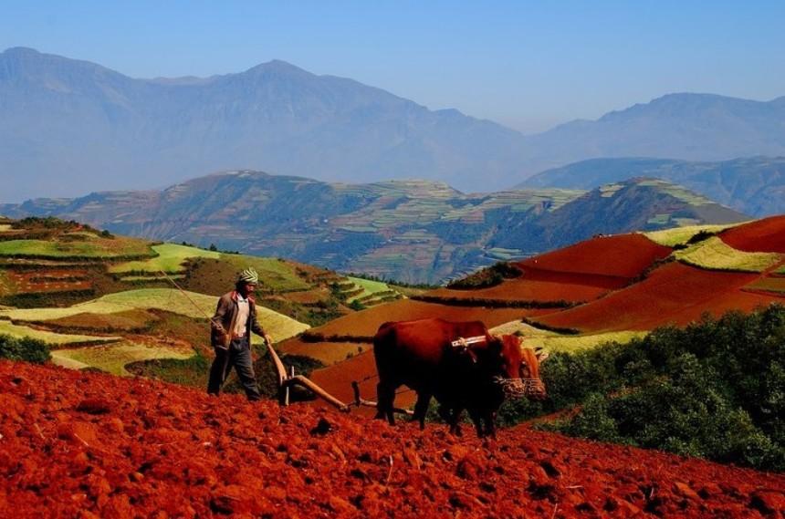 Красные террасовые поля в Китае
