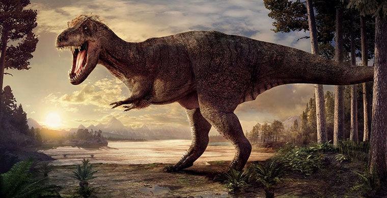 Походка птиц рассказала о биомеханике гигантских динозавров