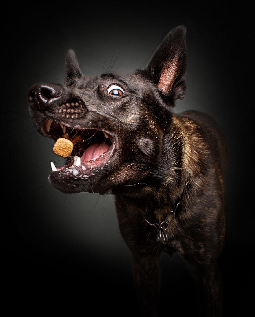Открытки, картинки псы смешные