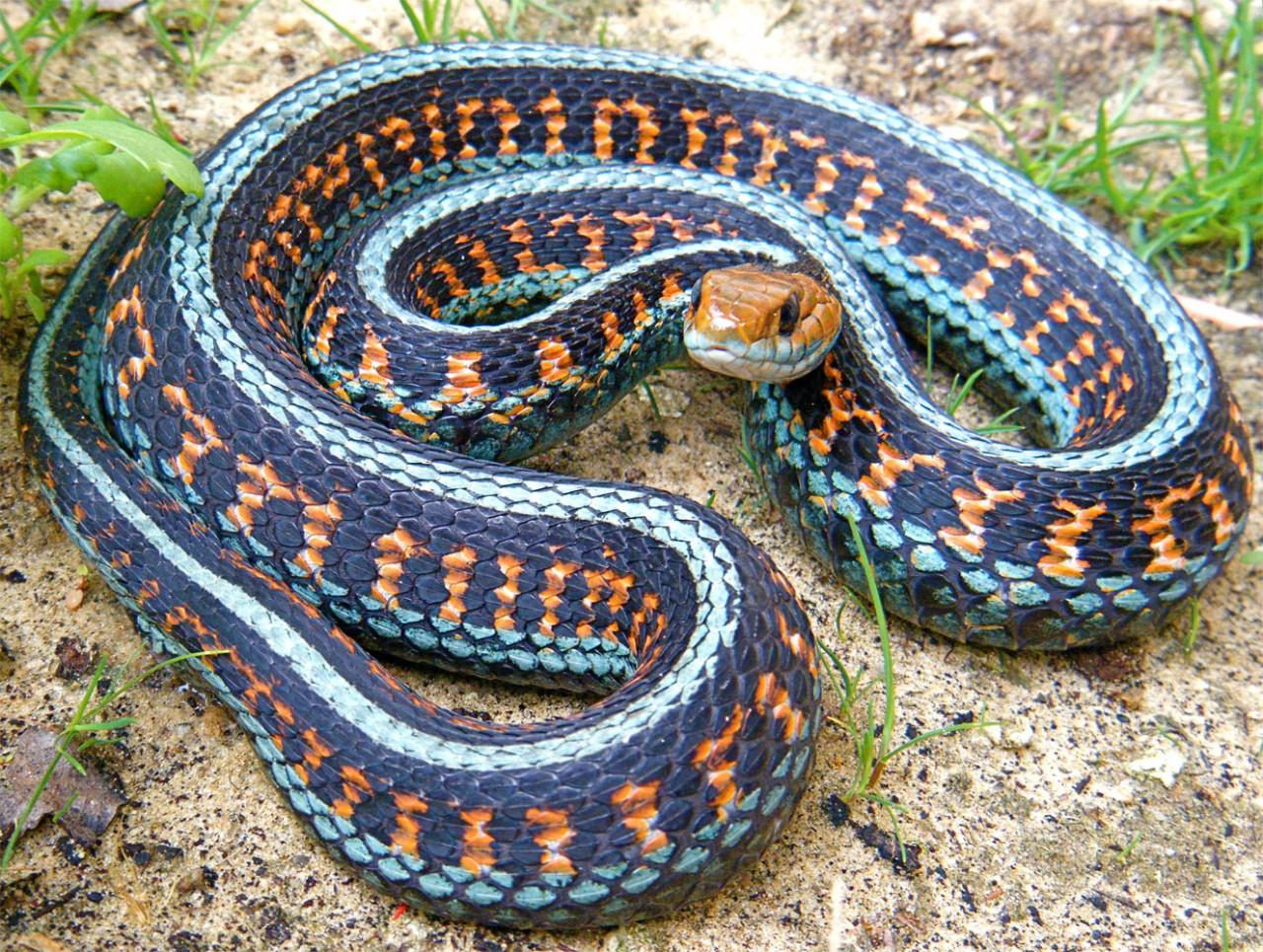 все виды змей мира фото и названия удастся найти