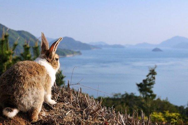Секретный японский остров, оккупированный кроликами, и стёртый с карт