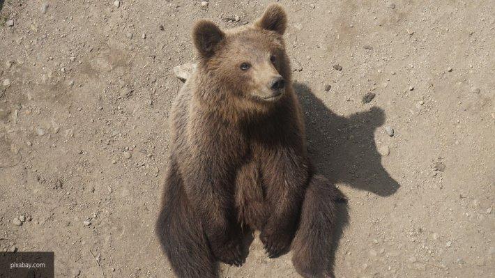 Во дворах жилого дома в Уфе обнаружен дикий медвежонок
