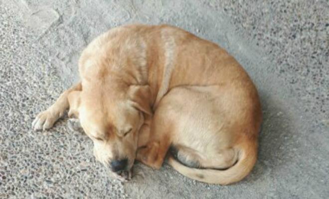 Женщина оставила знакомому собаку на полгода, а когда вернулась, лабрадор перестал помещаться в дверь Культура