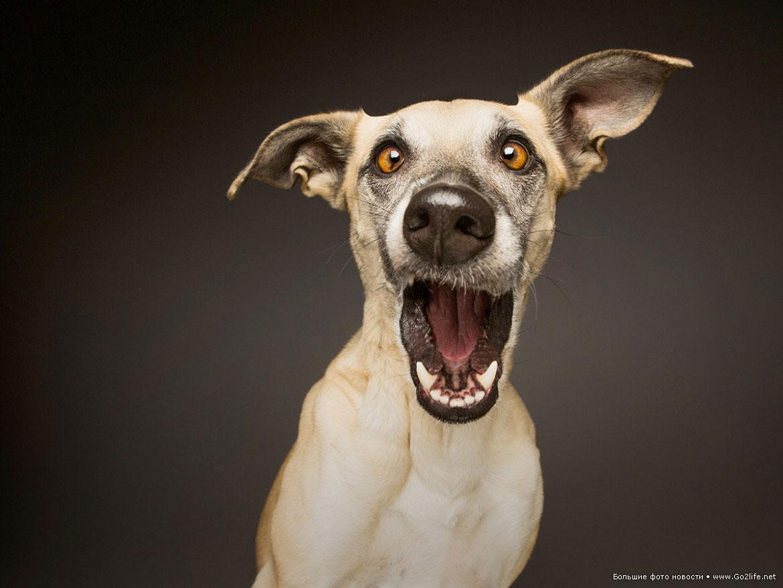 Курантами, собаки смешные картинки фото