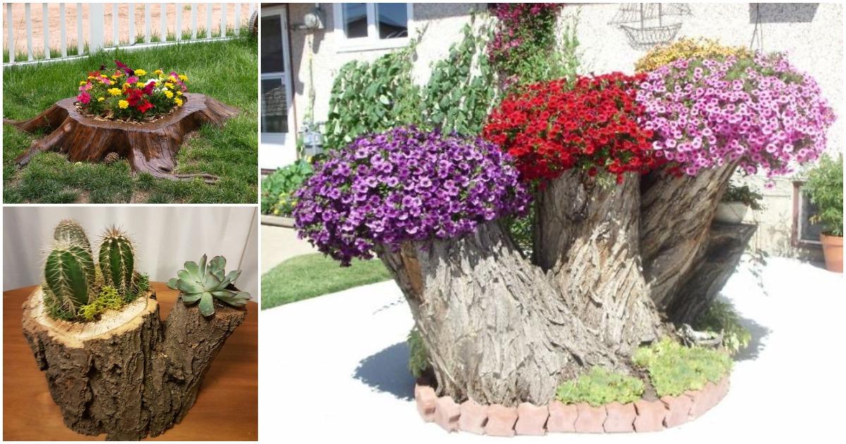 И даже пень зацветает: идеи цветников, созданных самой природой