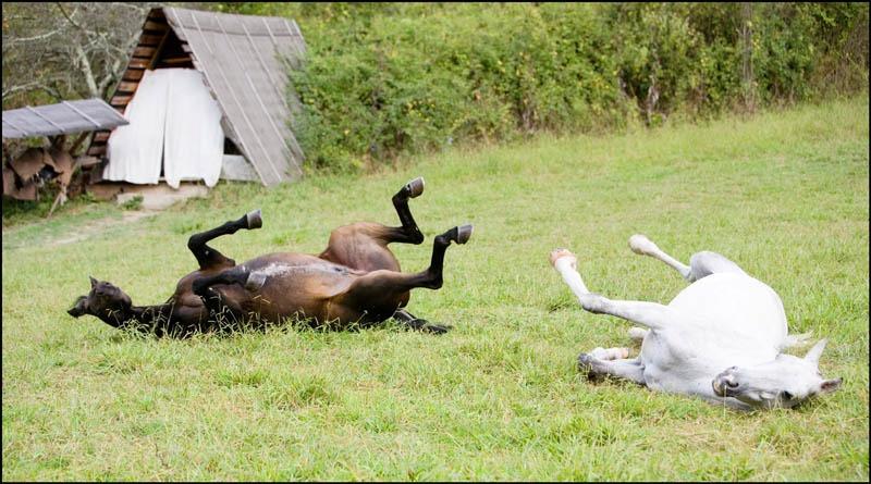 От тяжелой работы не только кони дохнут, но и деменция подкрадывается