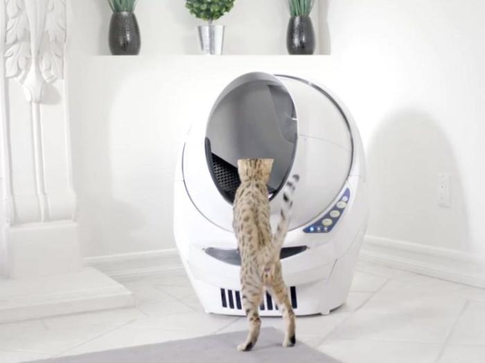 Самоочищающийся робот-туалет для кошек - мечта всех хозяев мурчащих.