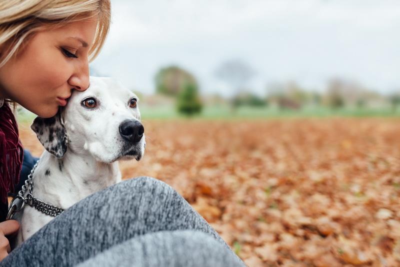 Пошаговая инструкция: как спасти жизнь собаке в 5 этапов
