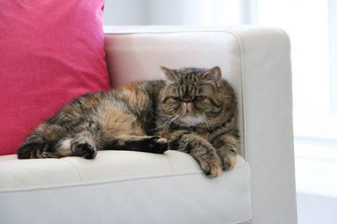 25 самых необычных пород кошек