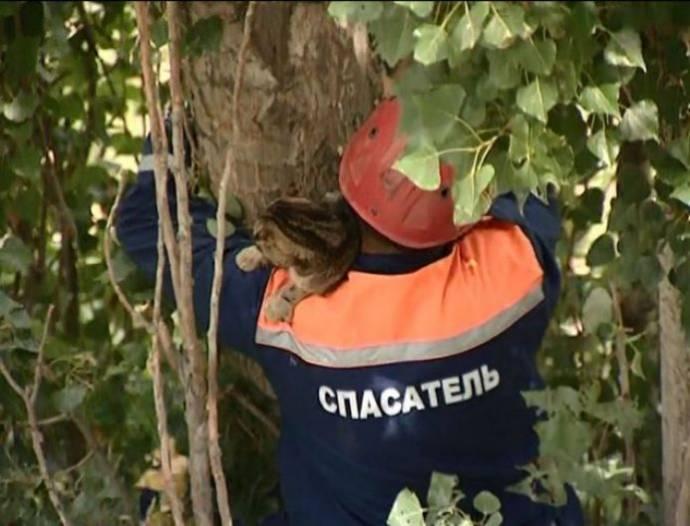 В Дагестане спасли кота, неделю просидевшего на дереве