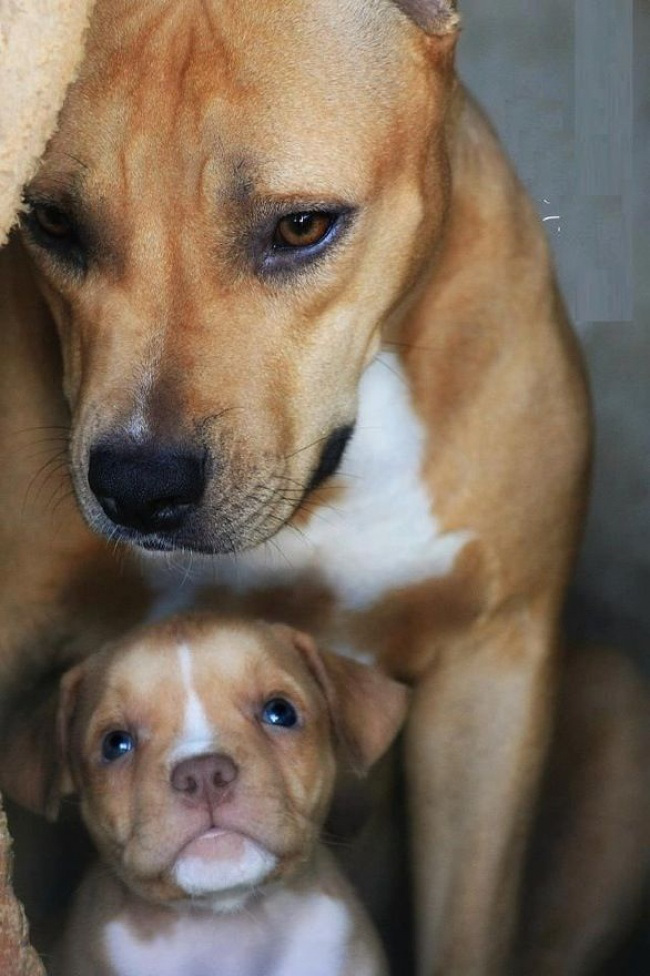 Moms and babies in the dog world