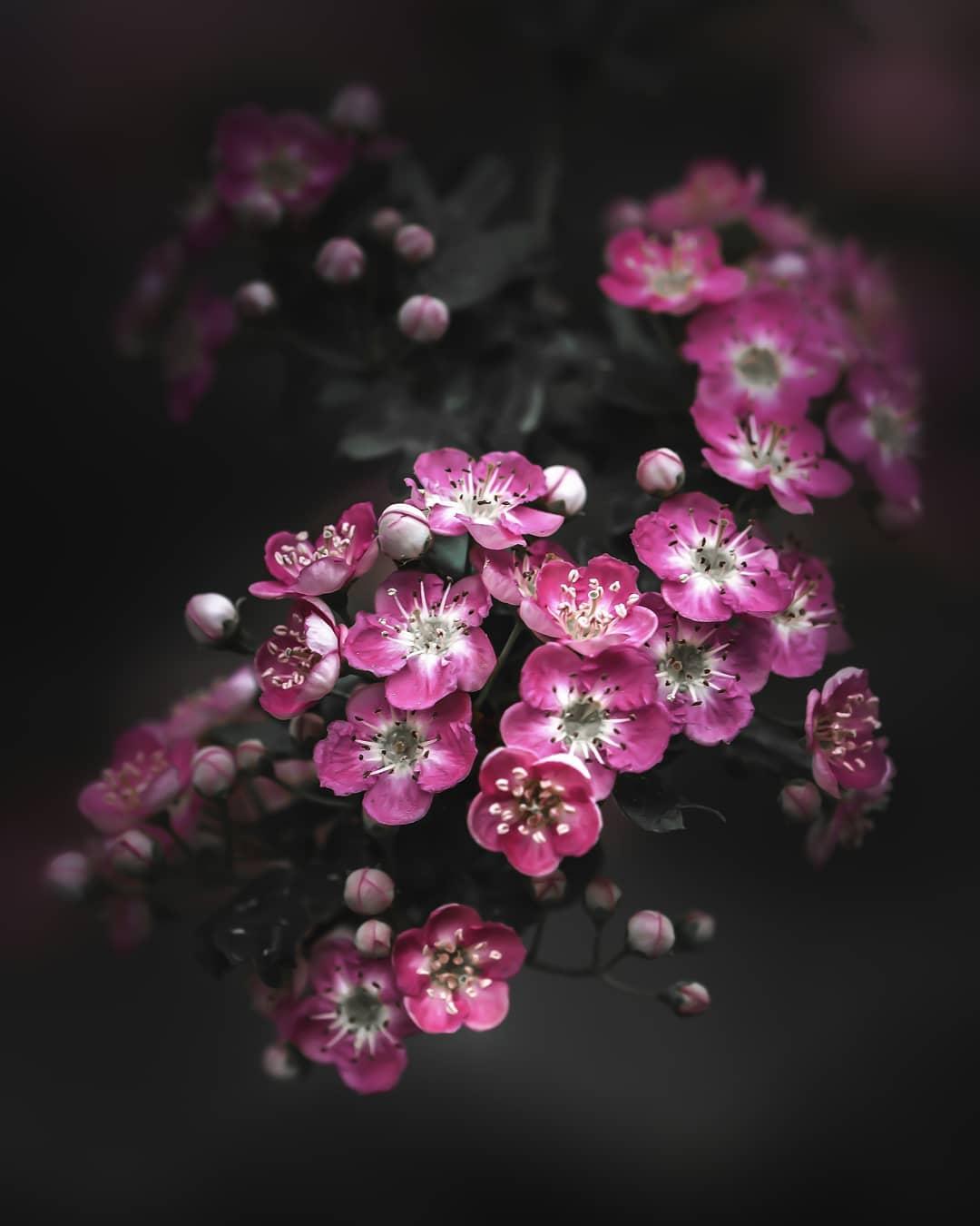 Замечательные цветы Питера Висса