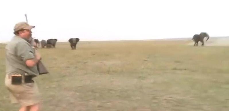 «Стреляй ему между глаз!»: Охотники сняли убийство слона, а затем видео случайно попало в Сеть видео, животные, охота, охотник, охотники, слон, убийство