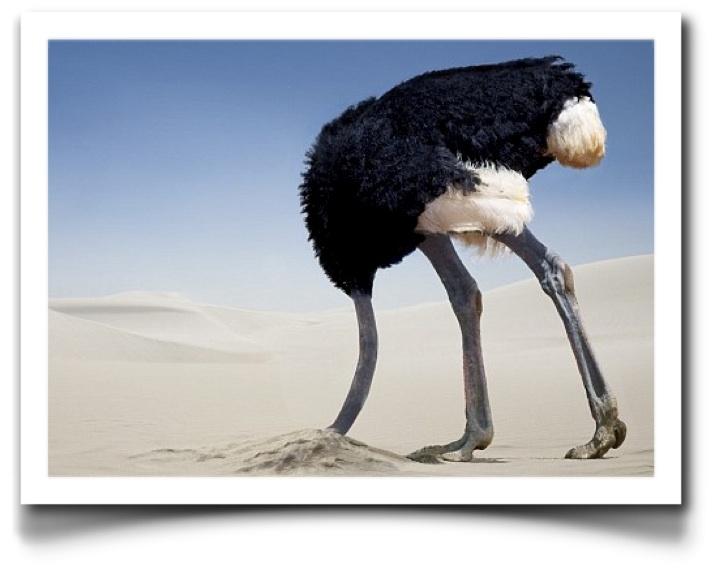 Страус в песке демотиваторы