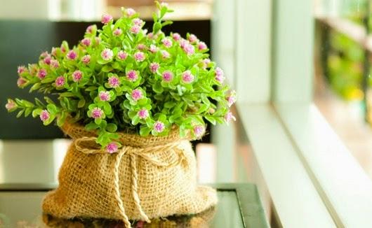 Оригинальные идеи по украшению домашних растений
