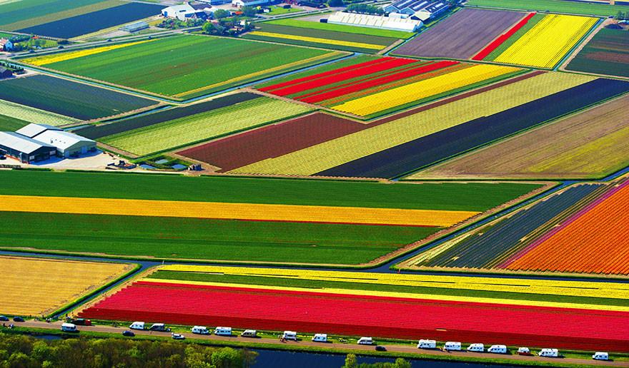 5. Поля тюльпанов, Нидерланды красота, пейзажи, природа