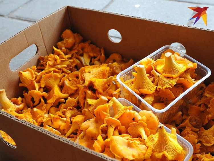 Варенье из ... лисичек варенье,грибы,десерты,еда,кулинария