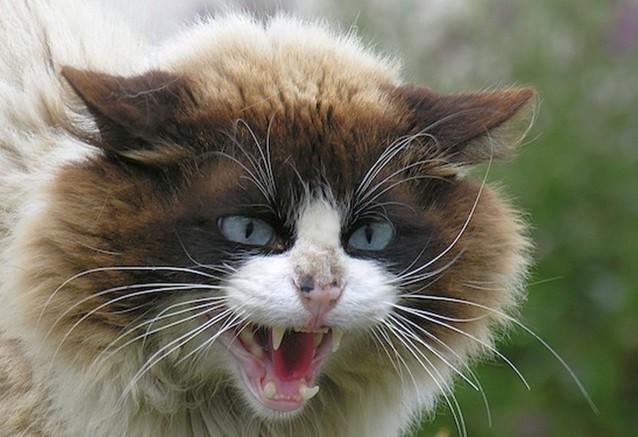Война с котом, Как мы с Барс…