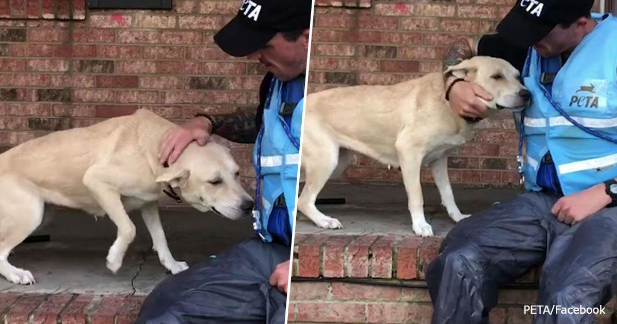 Испуганная собака счастлива увидеть спасателей: хозяева бросили ее во время урагана