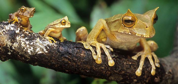 ТОП 19 фотографий самых семейных животных