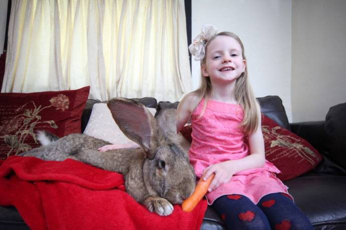 У самого большого кролика в мире подрастает такой же огромный сын