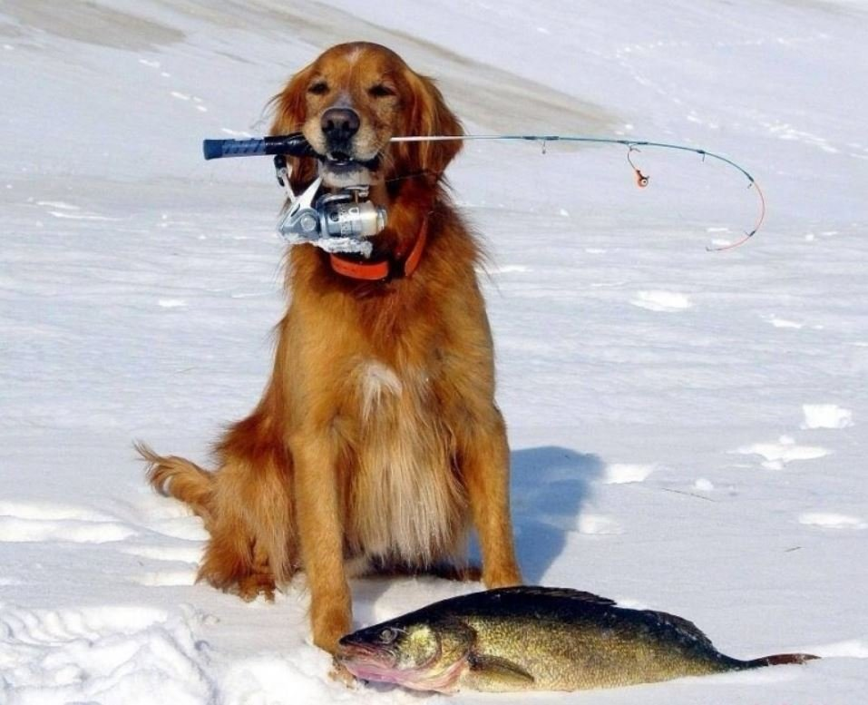 Еду на рыбалку картинки