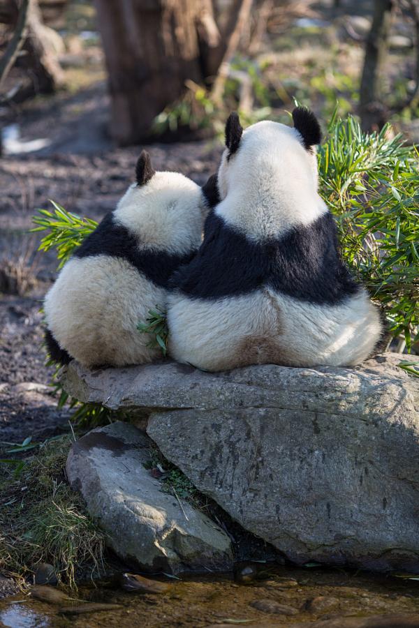 Днем рождения, панда приколы в картинках