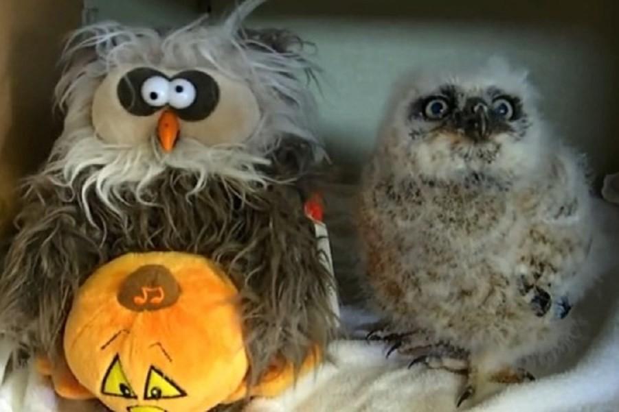 """Выступление маленькой совы: Оукли танцует """"Monster Mash"""""""