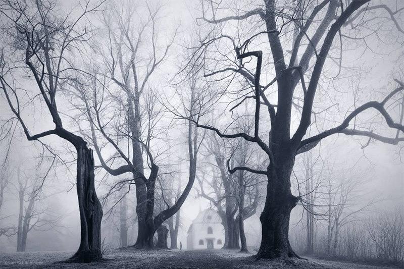 Облачный Лес — Лесные пейзажи от фотографа Kilian Schönberger