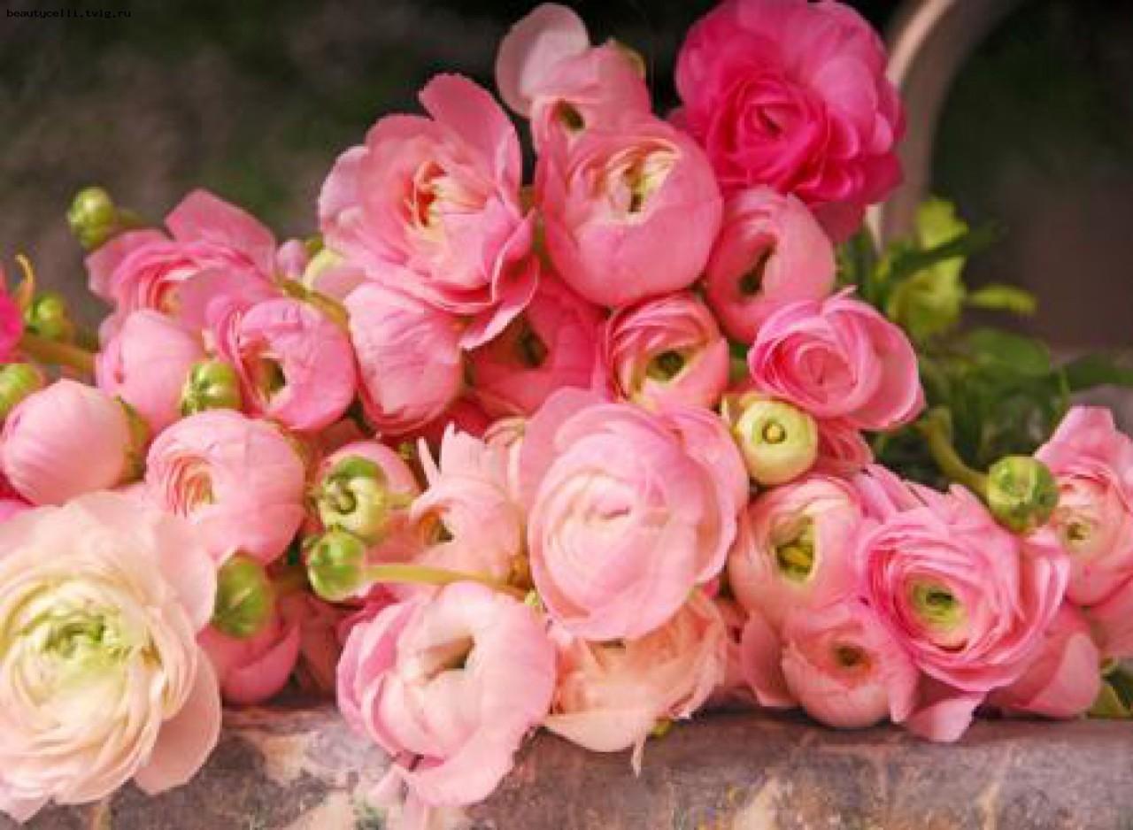 Красивые цветы, картинки с днем рождения ранункулюсы