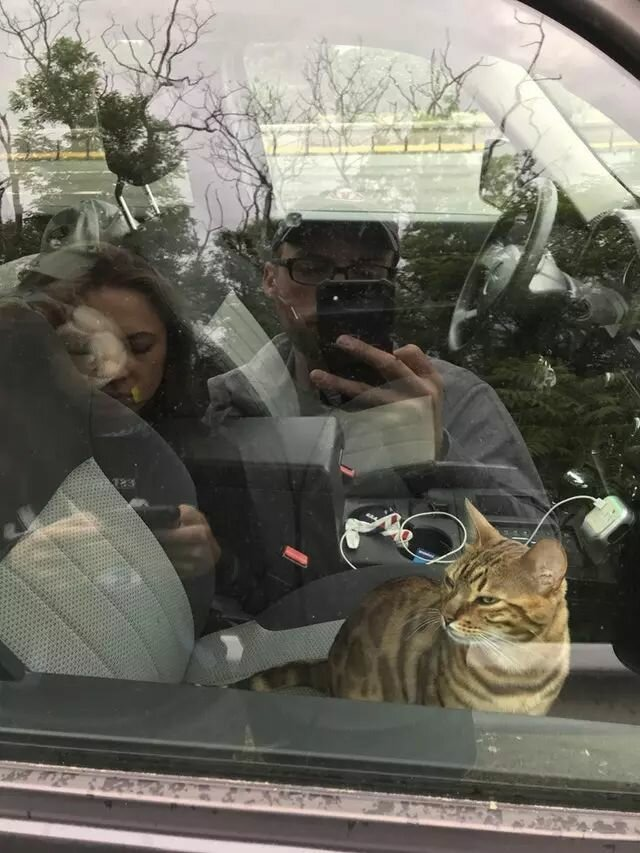 Кот в доме хозяин: подборка случаев, когда коты показали, кто тут главный