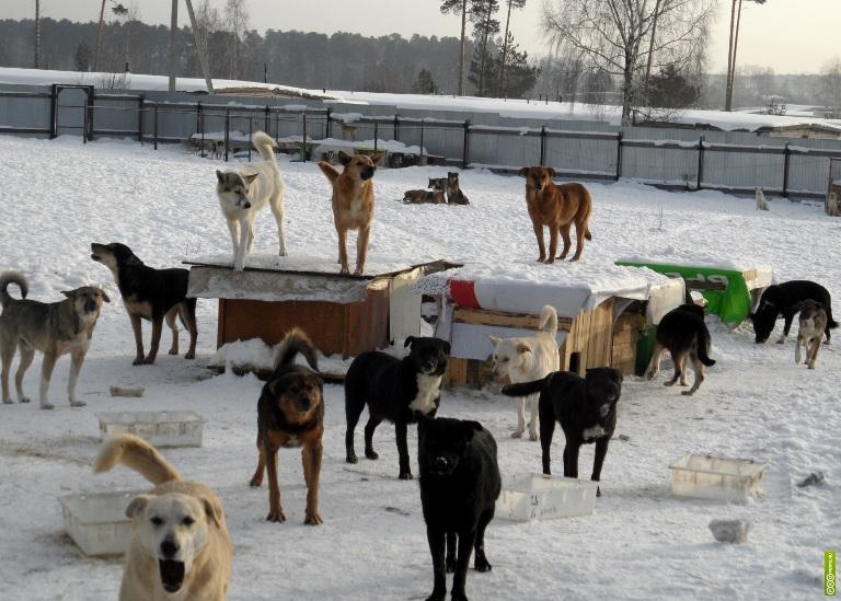 Как защититься от стаи диких собак