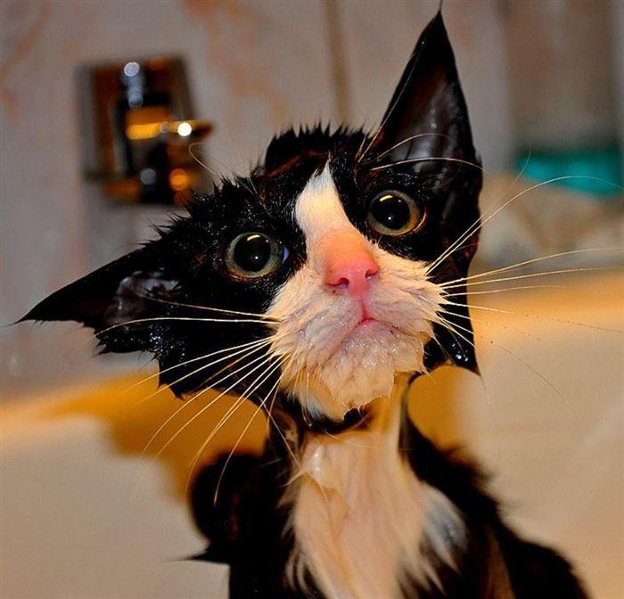 Приколы картинки кошки