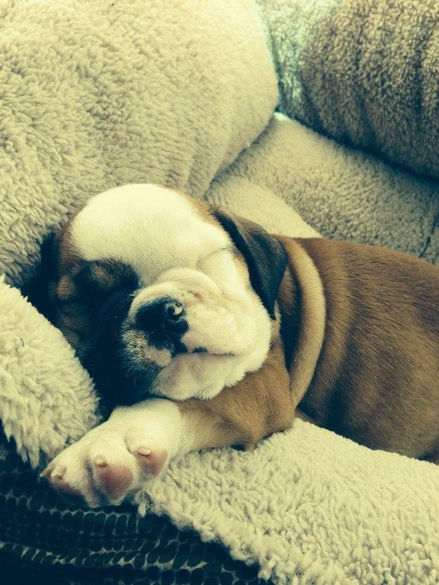 самые милые щеночки в мире (17)