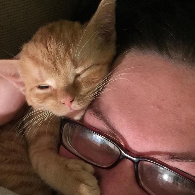 Котенок и хозяйка