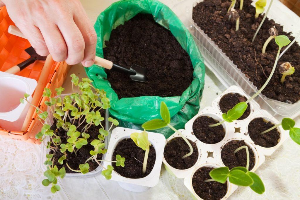 10 рассадных хитростей, которые помогут получить щедрый урожай