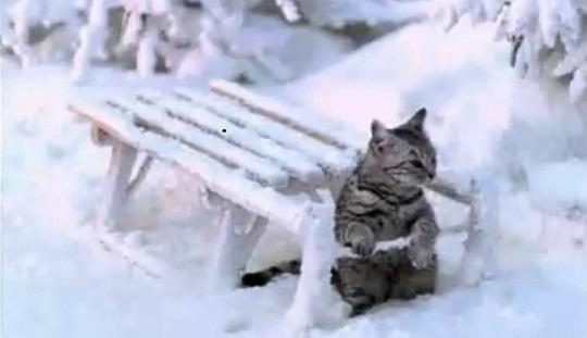 Коты, которые обожают снег