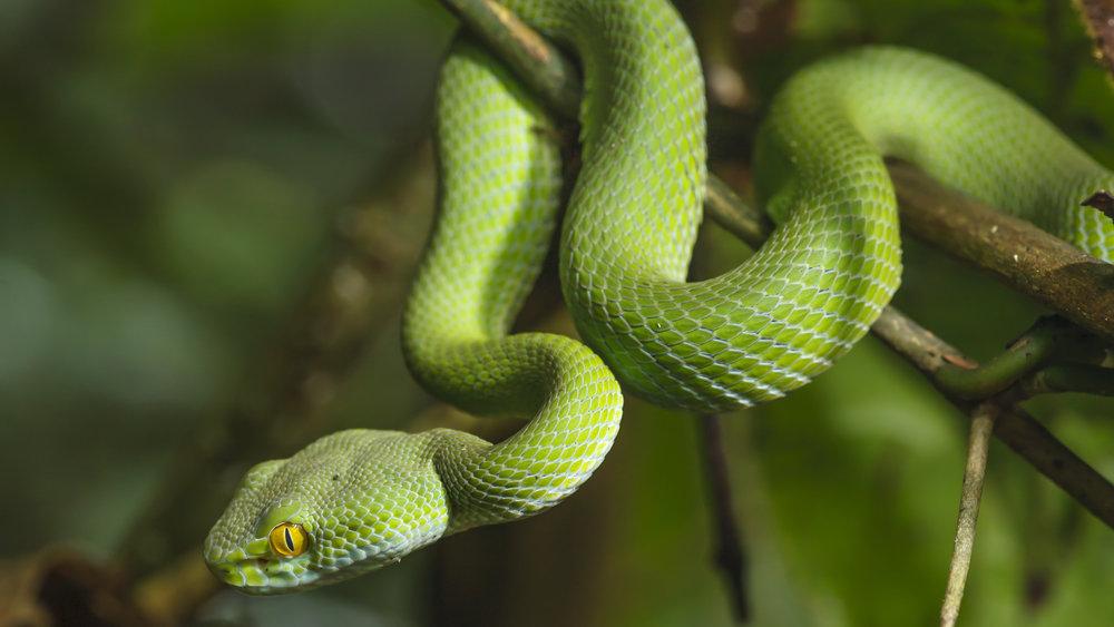 Шокирующий ролик со змеями н…