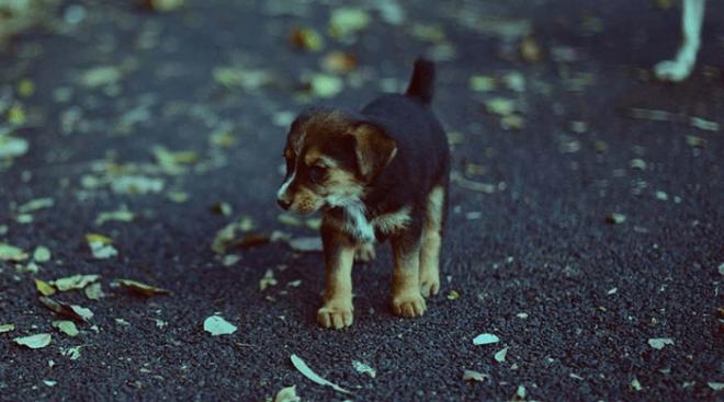 LДевушка подобрала беспризорного щеночка не подозревая что ей грозит