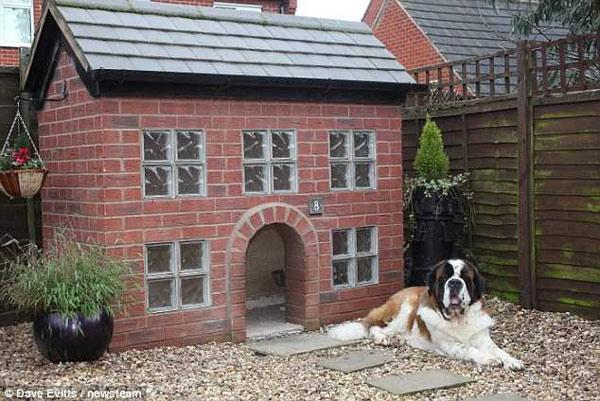 Шикарная собачья будка, фото новости о собаках фотография