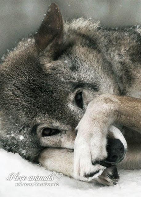 И зверя нет страшней, чем человек!