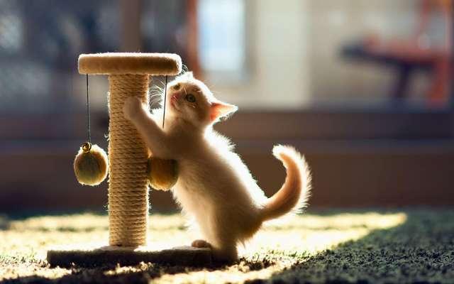 Почему кошки точат когти