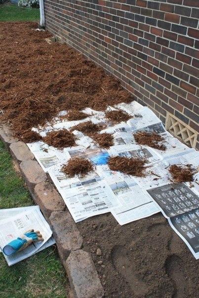 Как избавиться от сорняков на грядке?