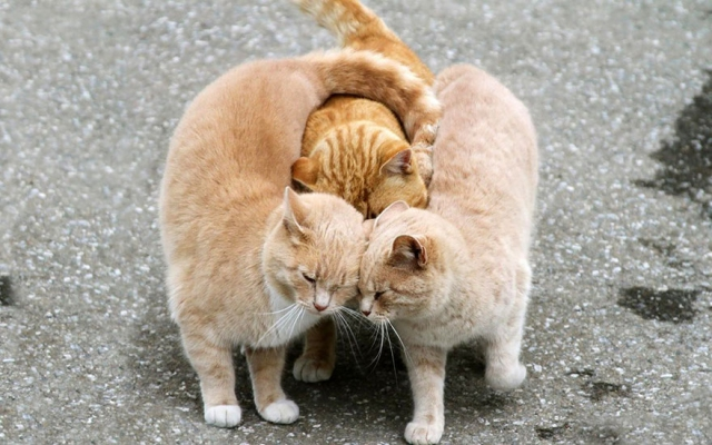 Снимки сладких парочек среди диких животных подтверждают, что любовь есть