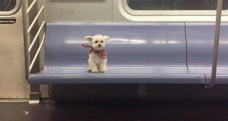 Собаки в поездках со своими владельцами: 10 смешных снимков