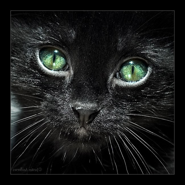 скучаю картинки черная кошка курицы