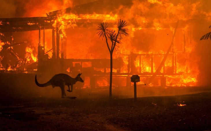 В Австралии бушуют лесные пожары