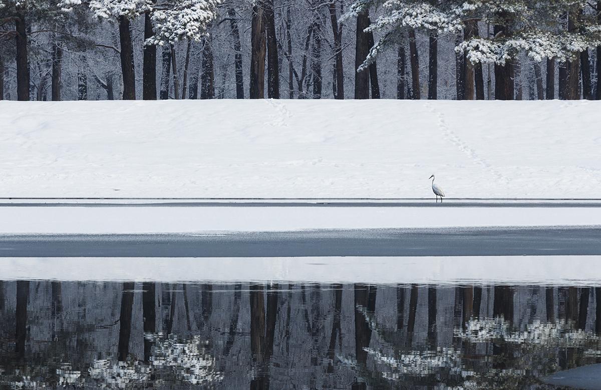 Победители и фавориты фотоконкурса «Дикая природа России – 2018» 35