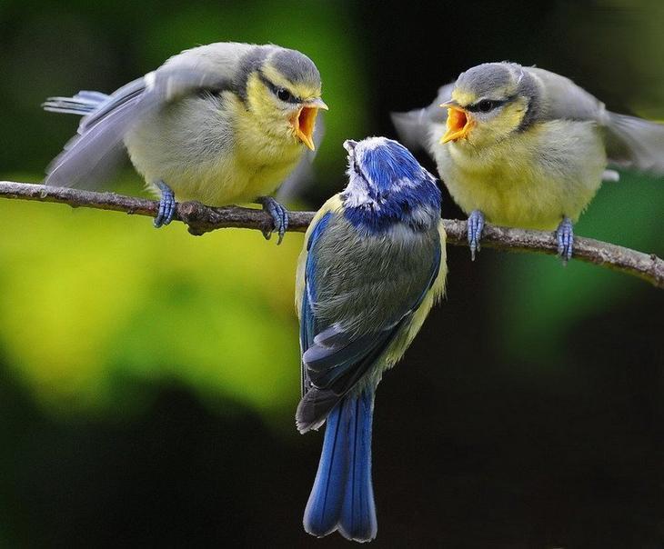 Картинки про птиц и животных смешные, открытка память детская